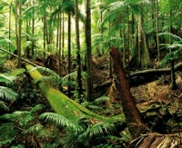 Mt Warning rainforest